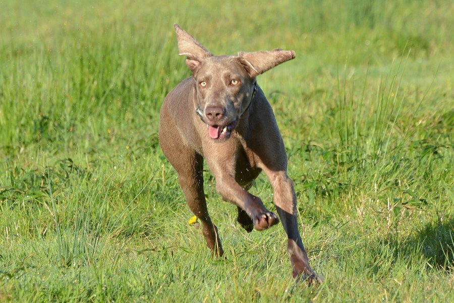 jacht met jachthonden